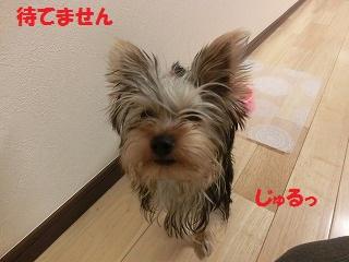 CIMG3891_20111128234345.jpg