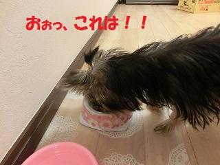 CIMG3895_20111128234342.jpg