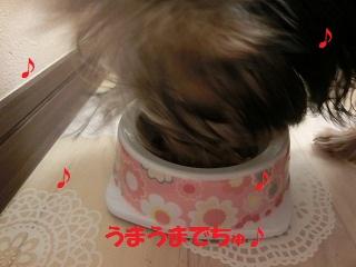 CIMG3896_20111128234342.jpg