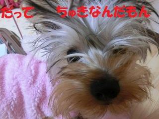 CIMG4035_20111212222617.jpg