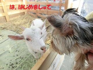 CIMG4238_20120117210251.jpg