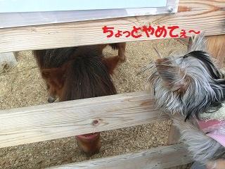 CIMG4241_20120117210251.jpg