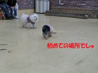CIMG4242_20120117210251.jpg