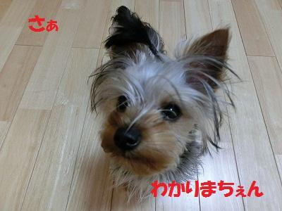 CIMG4371_20120128002254.jpg