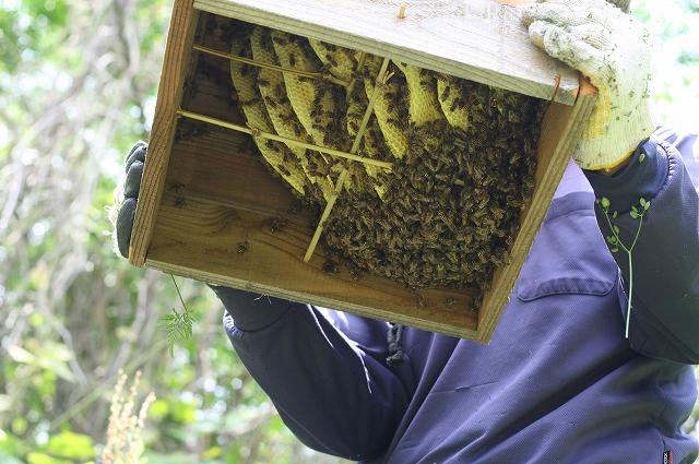 s-09蜂の巣 007