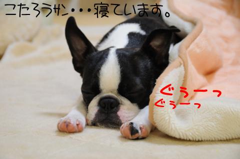 001_DSC_5449_342.jpg