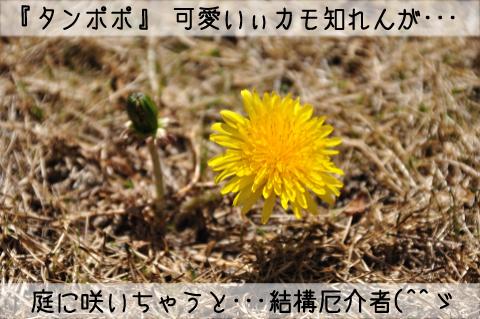 002_DSC_3751_125.jpg