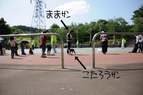 002_DSC_5695_412.jpg