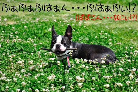 003_DSC_5512_358.jpg