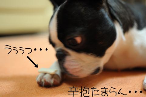 005_DSC_5927_434.jpg