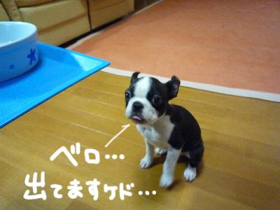 食べちゃいました。
