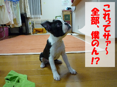 全部KoTaサンにだって!!!