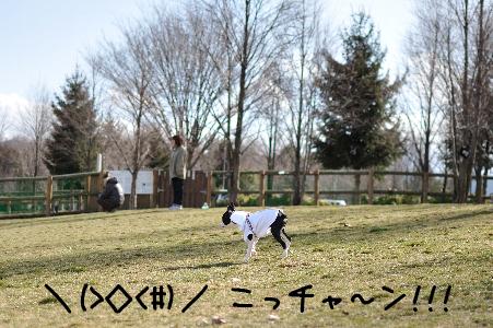 002_こっちゃぁ~んのコピー