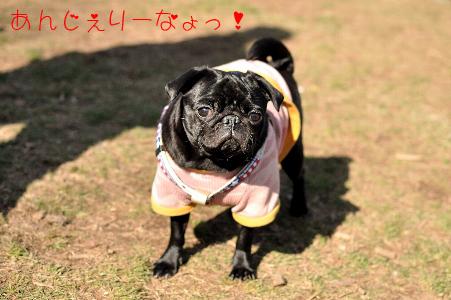 003_アンジェリーナちゃんのコピー