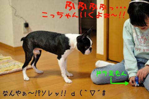002_DSC_3543_066のコピー