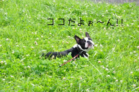 008_DSC_5688_400のコピー