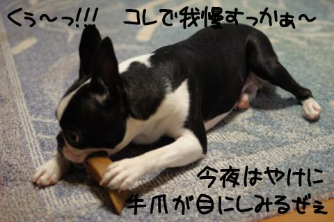 20090720_007.jpg