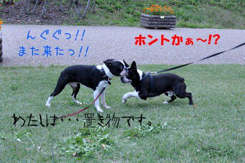 20091011_007.jpg