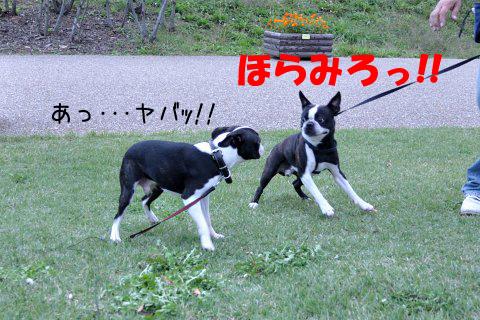 20091011_009.jpg