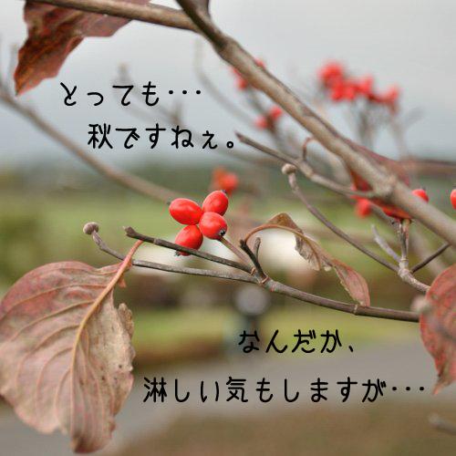 20091017_001.jpg