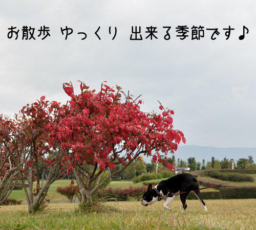 20091017_002.jpg