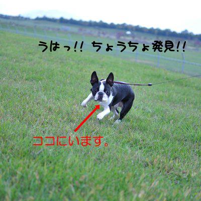 20091018_007.jpg