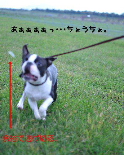 20091018_009.jpg