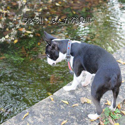 20091108_005.jpg
