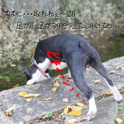20091108_007.jpg