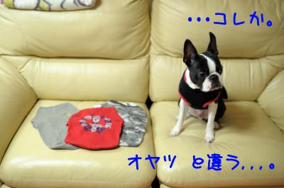 20091125_006.jpg