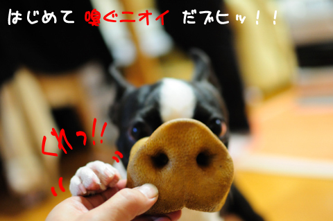 DSC_5377_317.jpg