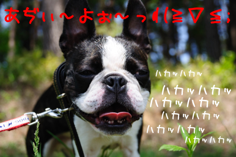 DSC_5403_319.jpg