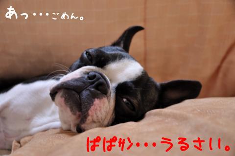 DSC_7315_771.jpg