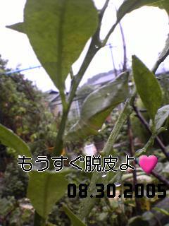 20050830190002