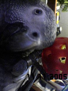 20051111203353