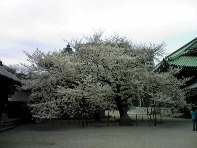 093023東長寺