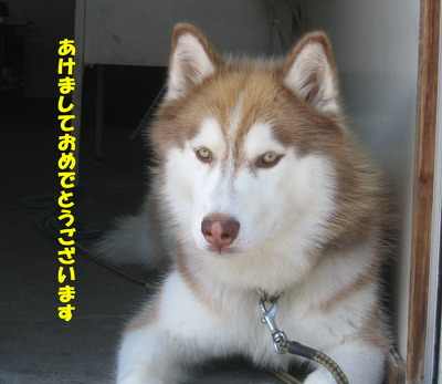 IMG_8946年賀