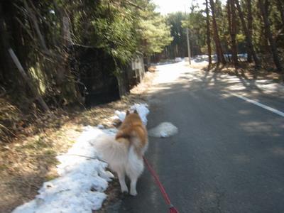 IMG_2229散歩