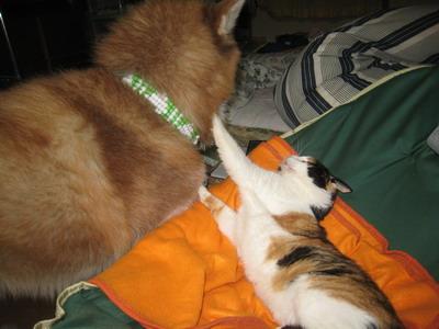 IMG_2504猫パンチ