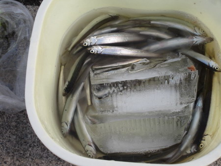 IMG_7635魚