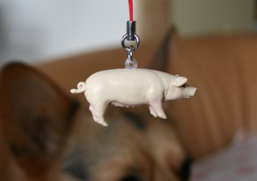 ぶた豚ぶー!