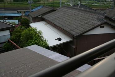 熱いトタン屋根の猫…でしたっけ?
