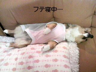 寝る子は育つデス