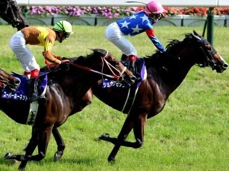 20100607-00000051-spn-horse-view-000.jpg