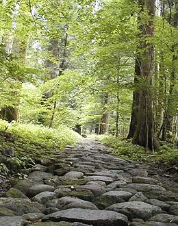 杉並木と石畳