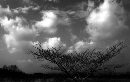 ミニコピーで撮った積雲