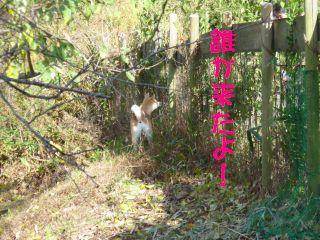 0911uekimura