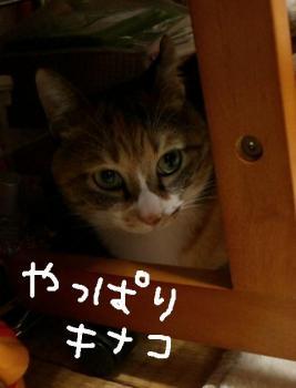 CIMG4492.jpg