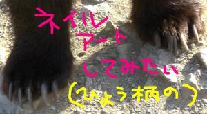CIMG4555.jpg
