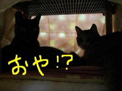 CIMG4675.jpg